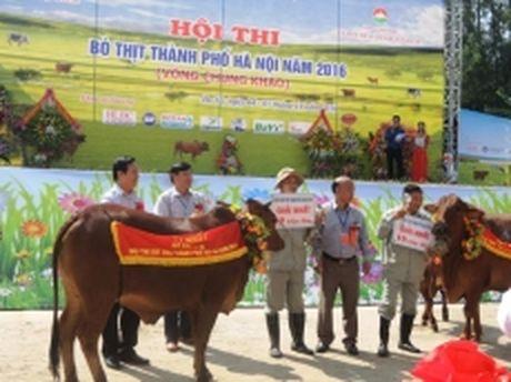 Hoi thi bo thit Thanh pho Ha Noi nam 2016 - Anh 1