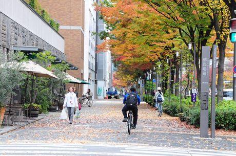 Dap xe vong quanh Kyoto trong mua thu la vang la do dep me hon - Anh 1