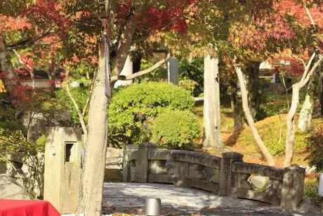 Dap xe vong quanh Kyoto trong mua thu la vang la do dep me hon - Anh 4