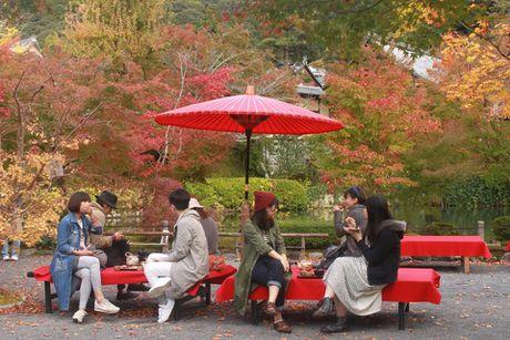 Dap xe vong quanh Kyoto trong mua thu la vang la do dep me hon - Anh 5