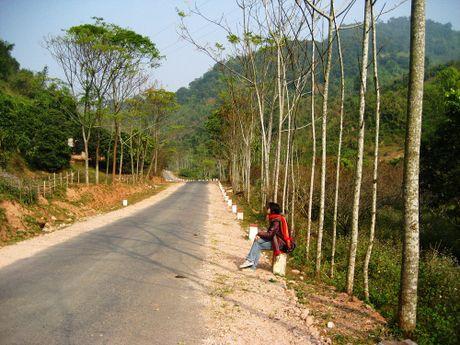 Lac buoc quen loi ve o 'thien duong hoa' Moc Chau thang 11 - Anh 8