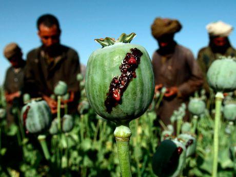 Khong phai Syria, dau moi la quoc gia tan cung 'dau kho' tren the gioi - Anh 2