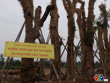 """Can canh vuon uom hoi sinh cac """"cu"""" xa cu tren pho Kim Ma - Anh 1"""