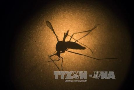 My thu nghiem vaccine phong virus Zika tren co the nguoi - Anh 1