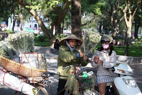 Ngam cuc hoa mi dau mua tren pho phuong Thu do - Anh 10
