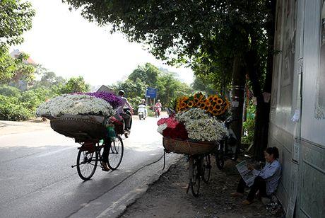 Ngam cuc hoa mi dau mua tren pho phuong Thu do - Anh 5