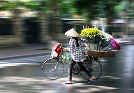 Ngam cuc hoa mi dau mua tren pho phuong Thu do - Anh 6