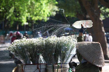 Ngam cuc hoa mi dau mua tren pho phuong Thu do - Anh 7