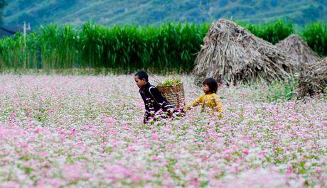 Dua hoa Tam Giac Mach Ha Giang ve bai tri tai Ha Noi - Anh 1