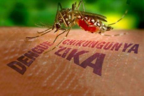 Cach phong benh virus Zika - Anh 1