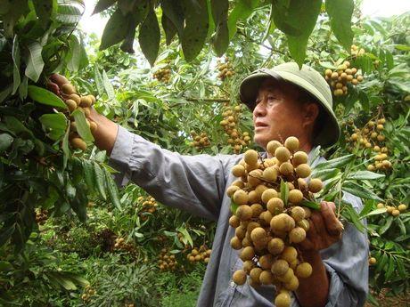 Bac nhat Viet Nam: Ban trai cay moi nam thu 2.600 ty - Anh 8