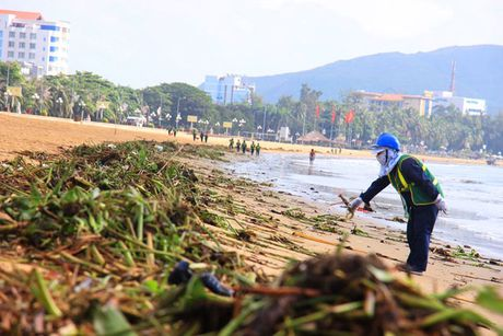 Beo, rac dai hon 3km tai bai bien Quy Nhon - Anh 3