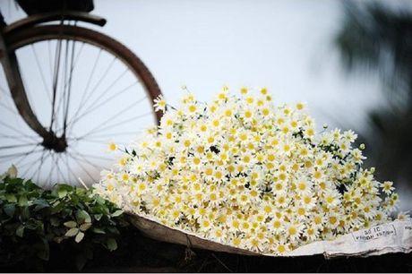 Ky thuat trong va cham soc hoa cuc trang dep lung linh cho tet - Anh 1