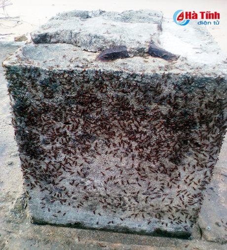 Nguoi dan Cam Xuyen 'rung minh' voi kien ba khoang! - Anh 3