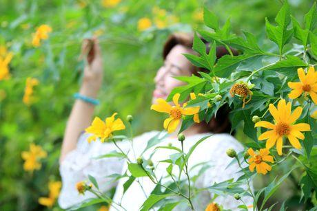 Dep ngo ngang mua hoa da quy o Ba Vi - Anh 12
