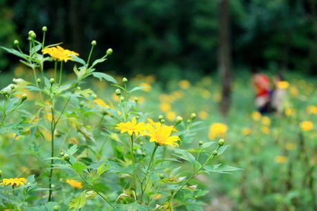 Dep ngo ngang mua hoa da quy o Ba Vi - Anh 13