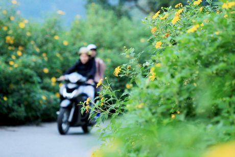Dep ngo ngang mua hoa da quy o Ba Vi - Anh 3