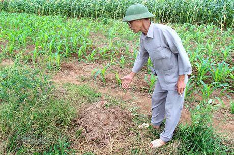 Ha Noi: Nga bo chung vi nghia trang moc sat nach - Anh 4