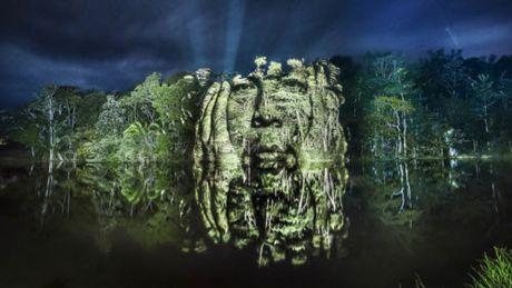 Kinh ngac bo tranh 've' tren cay trong rung Amazon - Anh 1
