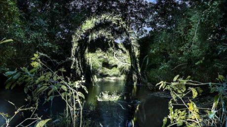Kinh ngac bo tranh 've' tren cay trong rung Amazon - Anh 2