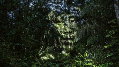 Kinh ngac bo tranh 've' tren cay trong rung Amazon - Anh 3
