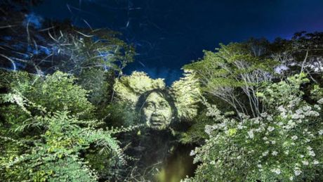Kinh ngac bo tranh 've' tren cay trong rung Amazon - Anh 6