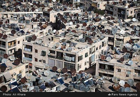 Canh binh yen hiem hoi o Aleppo trong chien tranh - Anh 8