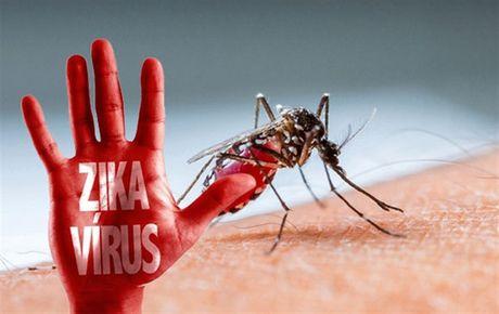 TP. HCM: Huy dong toan xa hoi phong chong dich benh do virus Zika - Anh 1