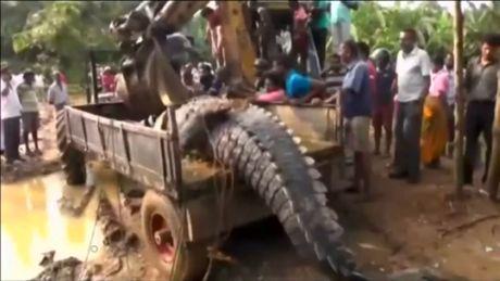 Phat hien ca sau quai vat nang 1 tan lan tron trong kenh Sri Lanka - Anh 2