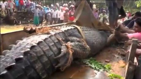 Phat hien ca sau quai vat nang 1 tan lan tron trong kenh Sri Lanka - Anh 3