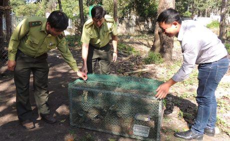 Kon Tum phat hien van chuyen dong vat hoang da - Anh 1