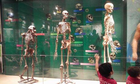 Kham pha Vien bao tang tu nhien, xem phim 3D mien phi giua Ha Noi - Anh 11