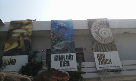 Kham pha Vien bao tang tu nhien, xem phim 3D mien phi giua Ha Noi - Anh 4