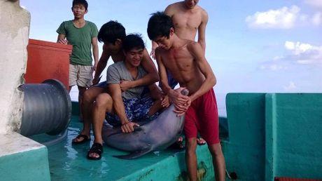 Bat ca heo roi cat dau, mo bung nghi tai Phu Quoc - Anh 1