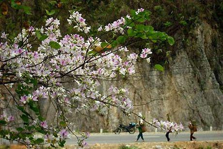Nhung mua hoa dep nhat mien Tay Bac - Anh 10