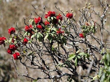 Nhung mua hoa dep nhat mien Tay Bac - Anh 11