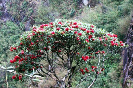 Nhung mua hoa dep nhat mien Tay Bac - Anh 12