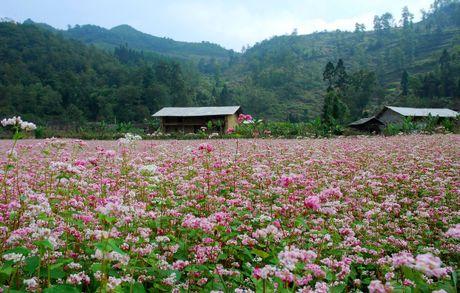 Nhung mua hoa dep nhat mien Tay Bac - Anh 1