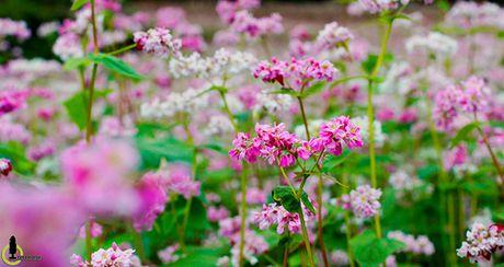 Nhung mua hoa dep nhat mien Tay Bac - Anh 2