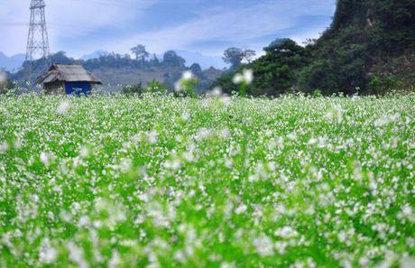 Nhung mua hoa dep nhat mien Tay Bac - Anh 3