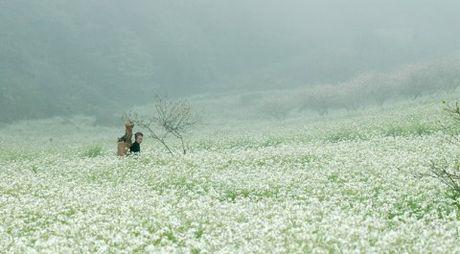 Nhung mua hoa dep nhat mien Tay Bac - Anh 4