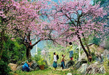 Nhung mua hoa dep nhat mien Tay Bac - Anh 6
