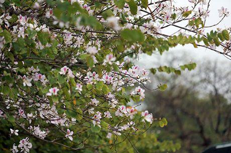 Nhung mua hoa dep nhat mien Tay Bac - Anh 8