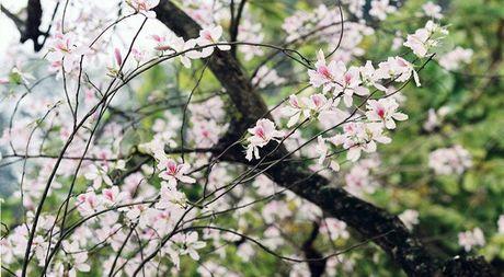 Nhung mua hoa dep nhat mien Tay Bac - Anh 9