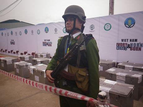 Lan dau tien Viet Nam tieu huy hon 2.000 kg nga voi - Anh 1