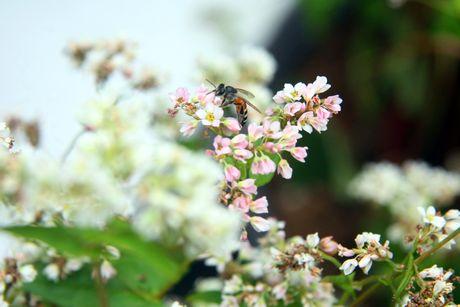 Thieu nu Ha thanh tao dang ben vuon hoa tam giac mach - Anh 5