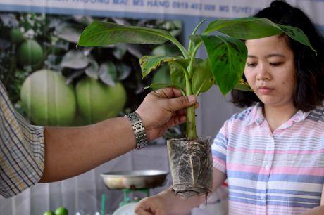 Chuoi khong lo tai hoi cho nong nghiep Sai Gon - Anh 7
