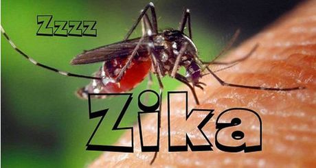 Bung phat dich sot xuat huyet va Zika tai TP.HCM; To chuc tieu huy 2 tan nga voi va 70 kg sung te giac - Anh 1