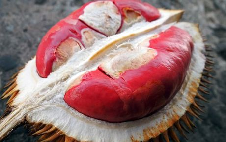 Sau rieng Malaysia gia tien trieu van hut khach hang Viet - Anh 7