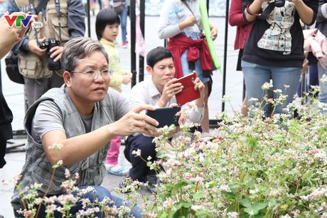Thich thu ngam hoa tam giac mach Ha Giang giua long Ha Noi - Anh 11